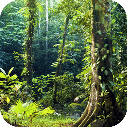 Deep In Heart Of Emerald Forest >> Lively Forest Ambiance